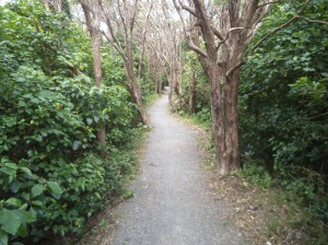 Heading down to Cross Creek on the Rimutaka Incline Track